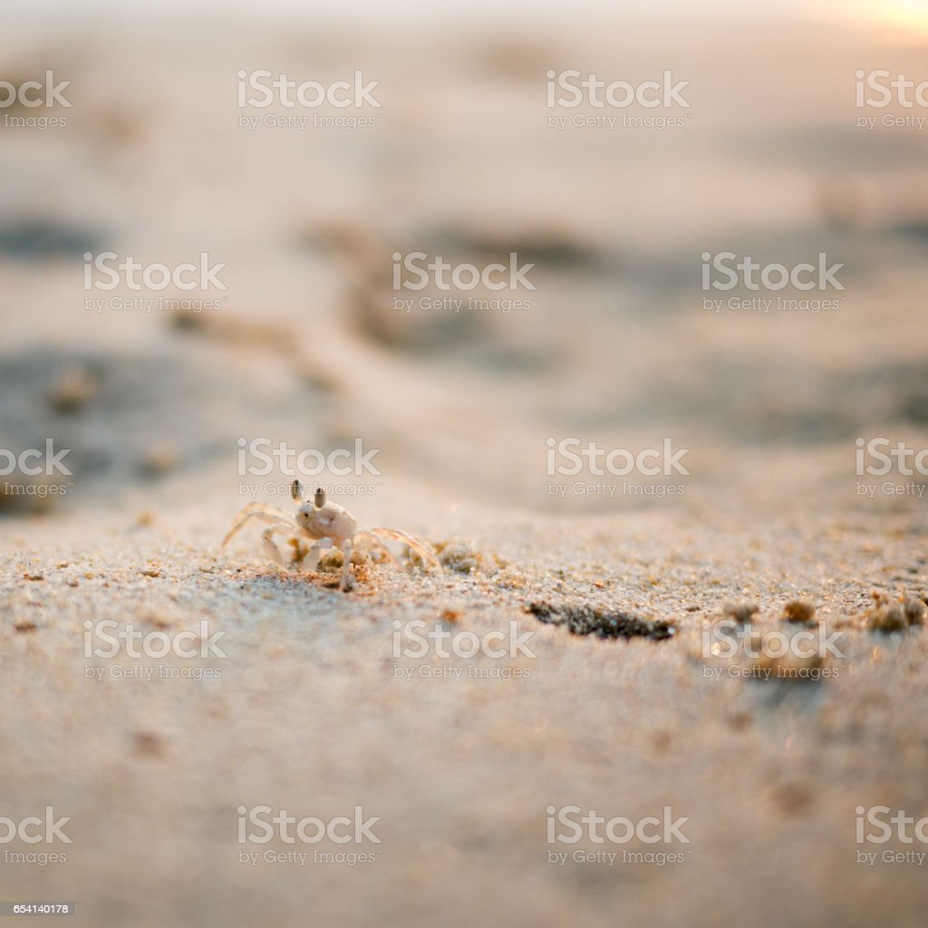 Ghost crab close up on the beach stock photo