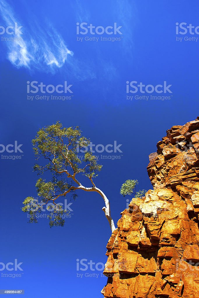Ghost Gum Tree, Northern Territory, Australia royalty-free stock photo