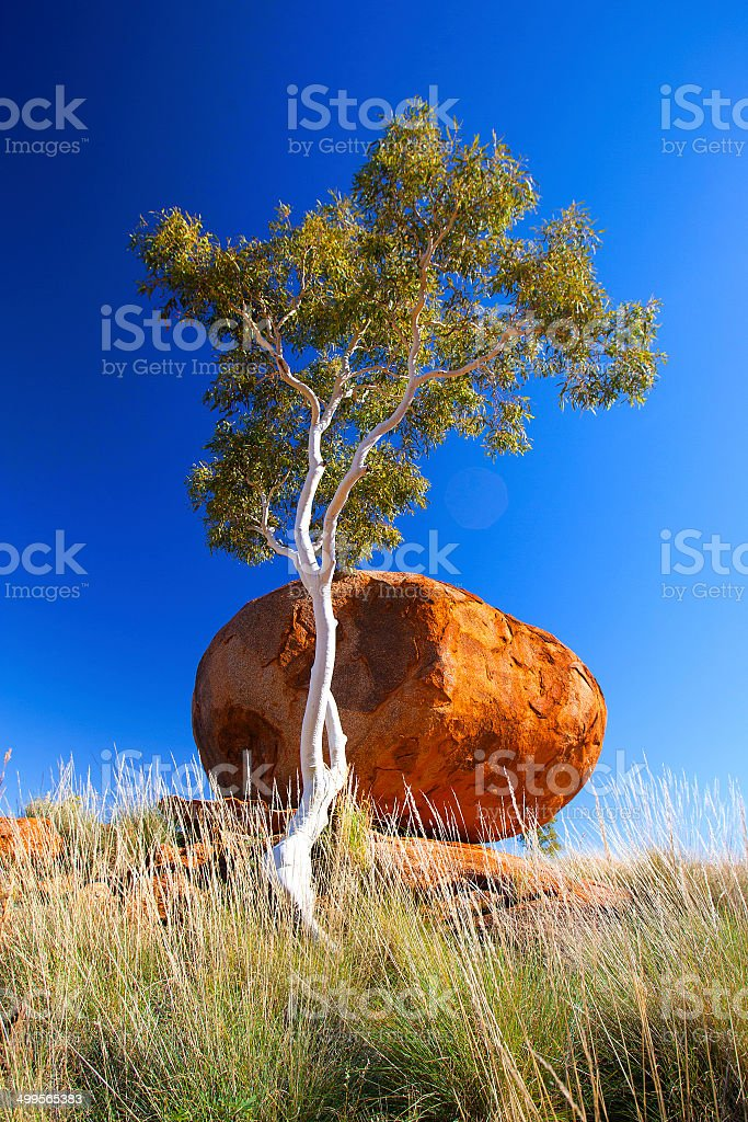 Ghost Gum Tree, Northern Territory, Australia royalty-free stock photo