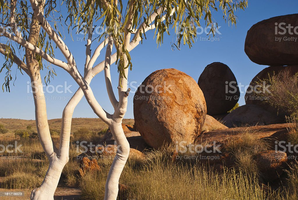 Ghost gums and the Devil's Marbles, Australia stock photo