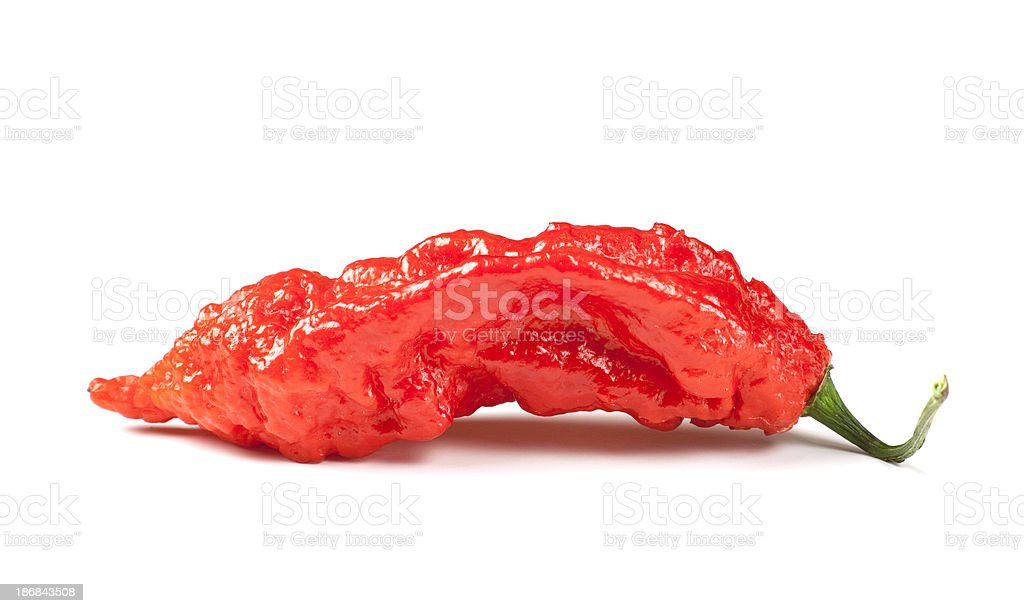Ghost Pepper, the hottest one on earth royalty-free stock photo