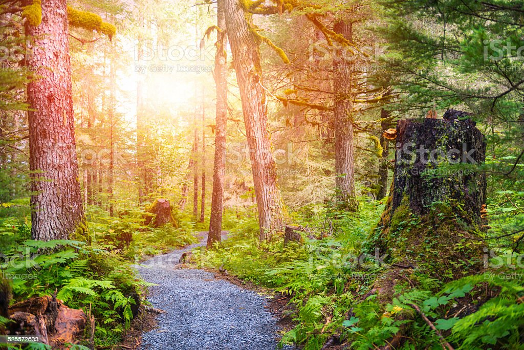 Ghugach Forest stock photo