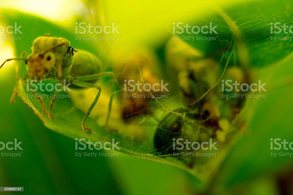 Giant ant web royalty-free stock photo