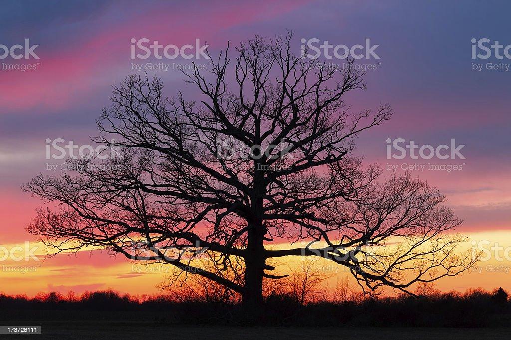 Giant al tramonto foto stock royalty-free