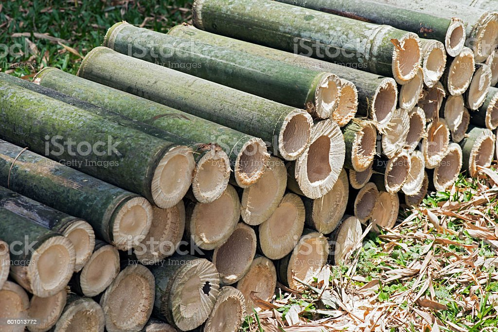Giant bamboo sawed stock photo