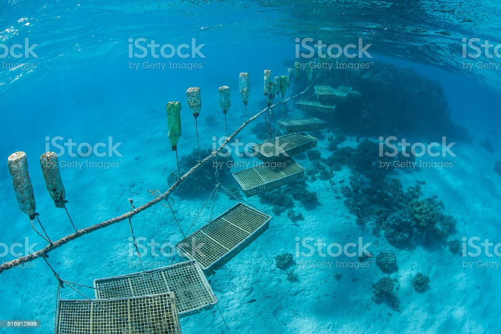 Giant Clam Farm in Cook Islands stock photo