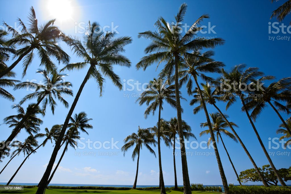 Giant coconut palm trees Vacation travel paradise sun grass blue stock photo