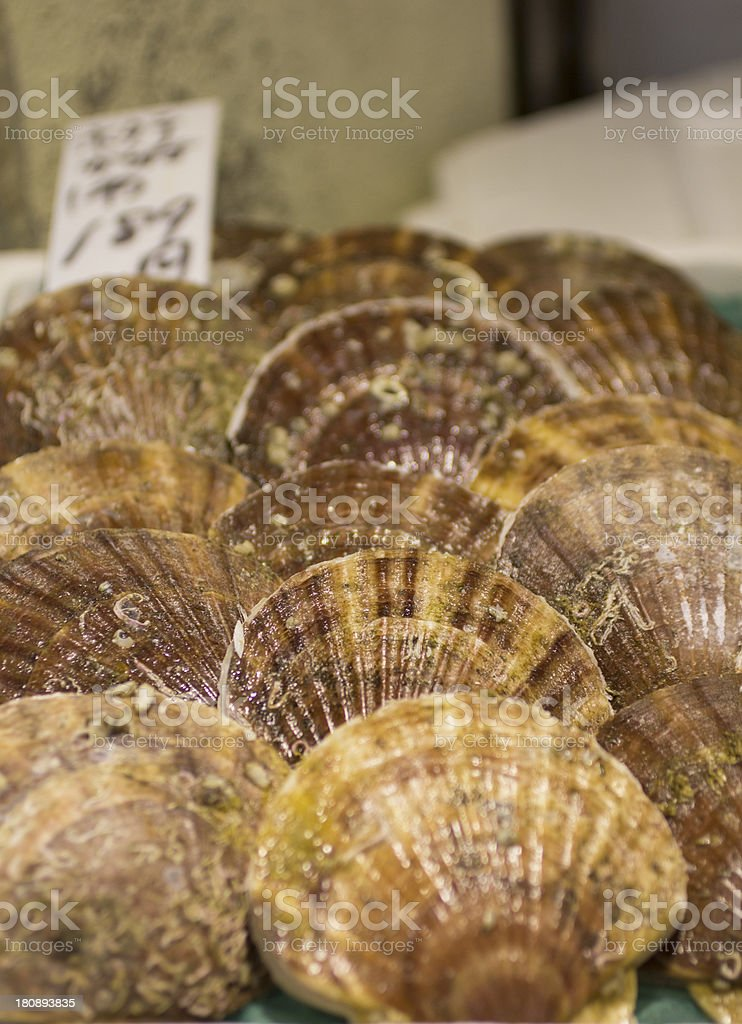 Giant Ezo Scallops stock photo