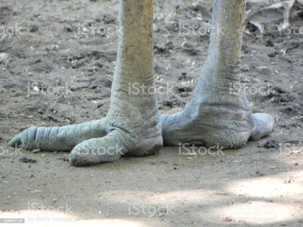 Giant Feet of a bird stock photo