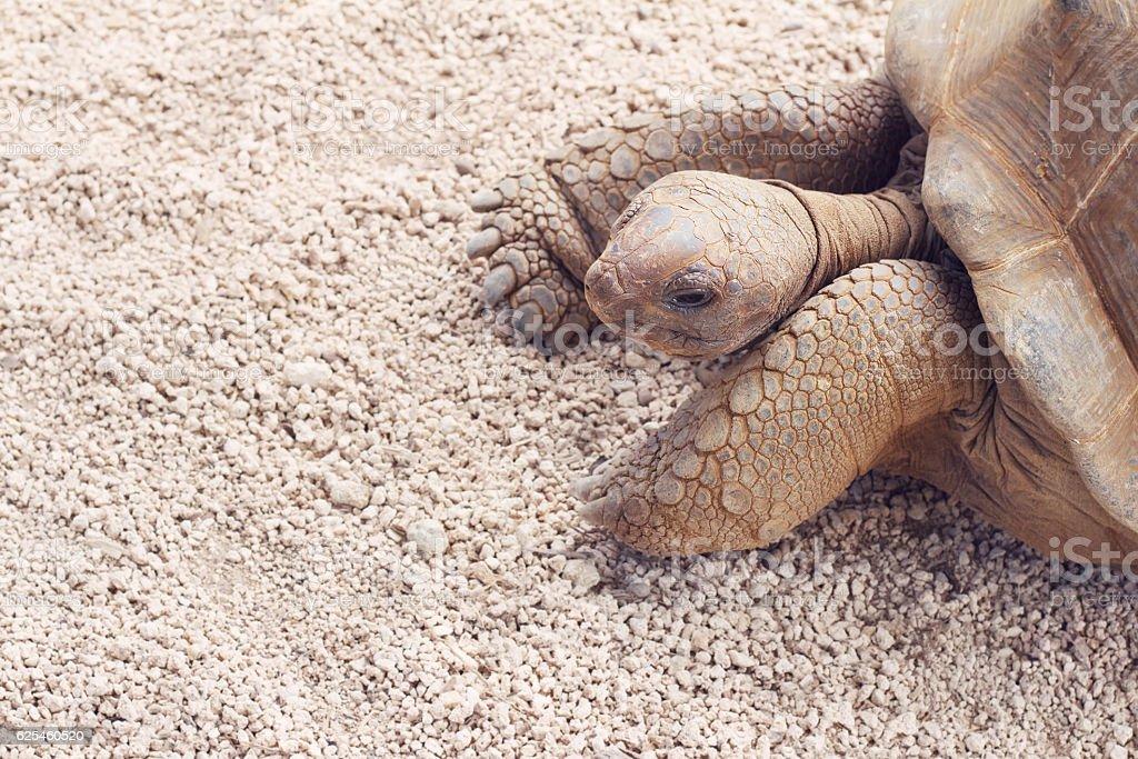 Giant grey tortoise on the ground stock photo