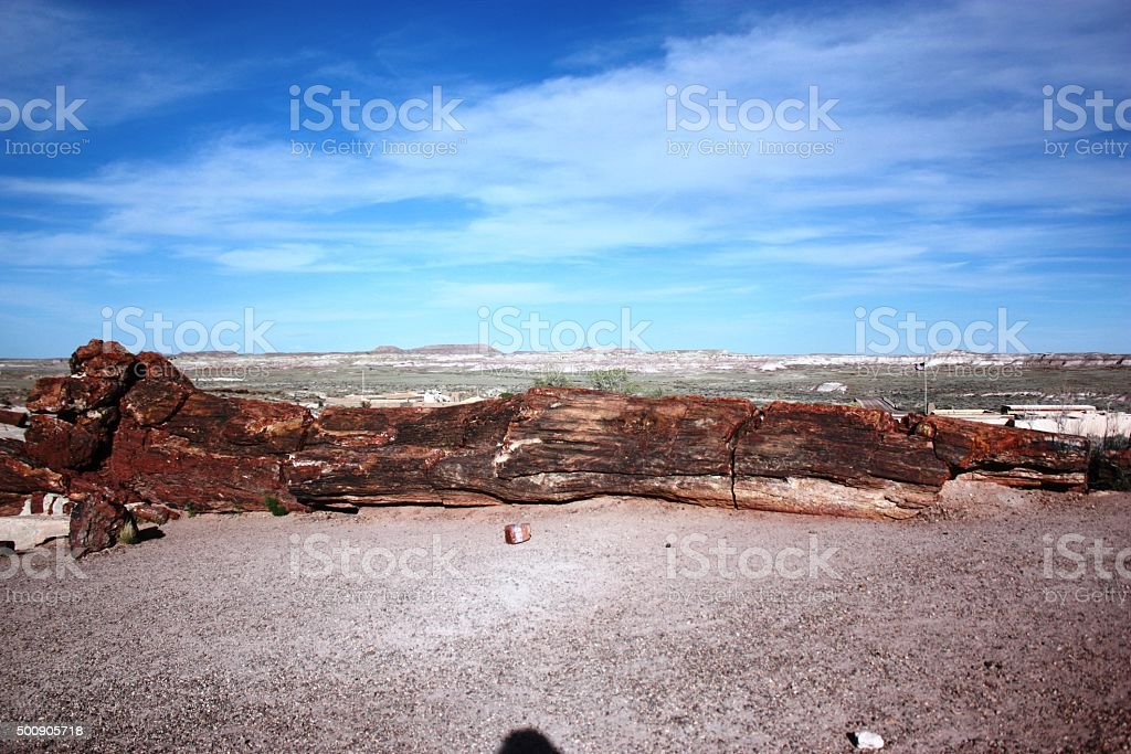 Giant Logs in Petrified Forest National Park in Arizona, USA stock photo