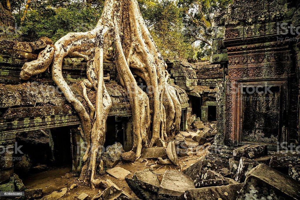 Giant Overgrown Root at Angkor Wat stock photo