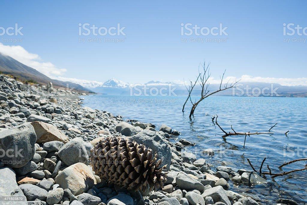 giant pine cone on stony shore of Lake stock photo