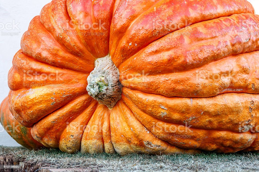 Giant Pumpkin stock photo