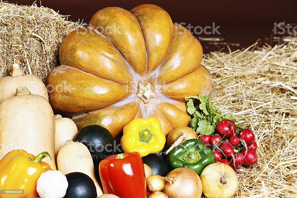 Giant pumpkin with other fresh fall vegetables on straw royalty-free stock photo