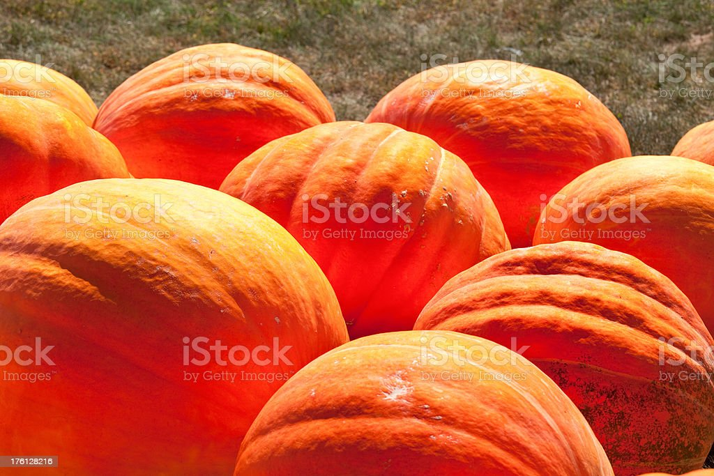 Giant pumpkins royalty-free stock photo