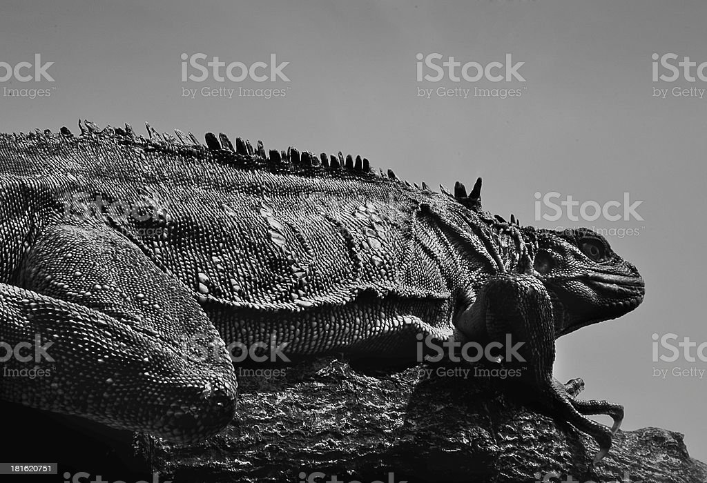 Giant Reptile royalty-free stock photo