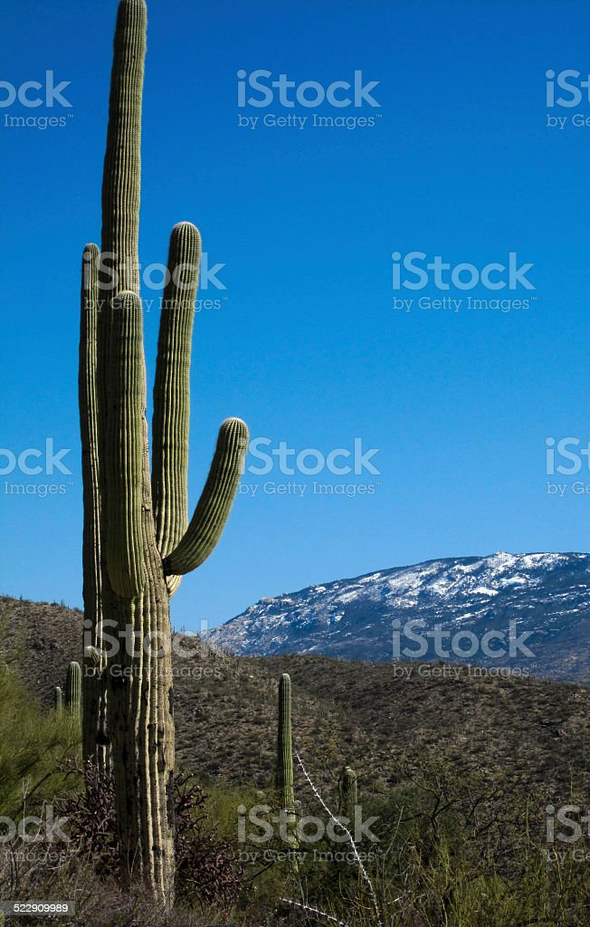 Giant Saguaro and a Snowy Hill stock photo