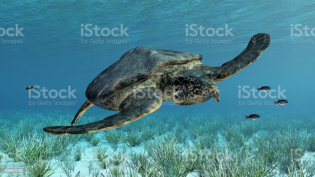 Giant sea turtle Archelon stock photo