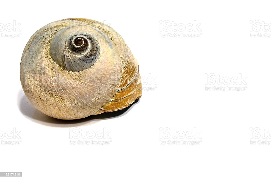 Giant Snail Shell stock photo