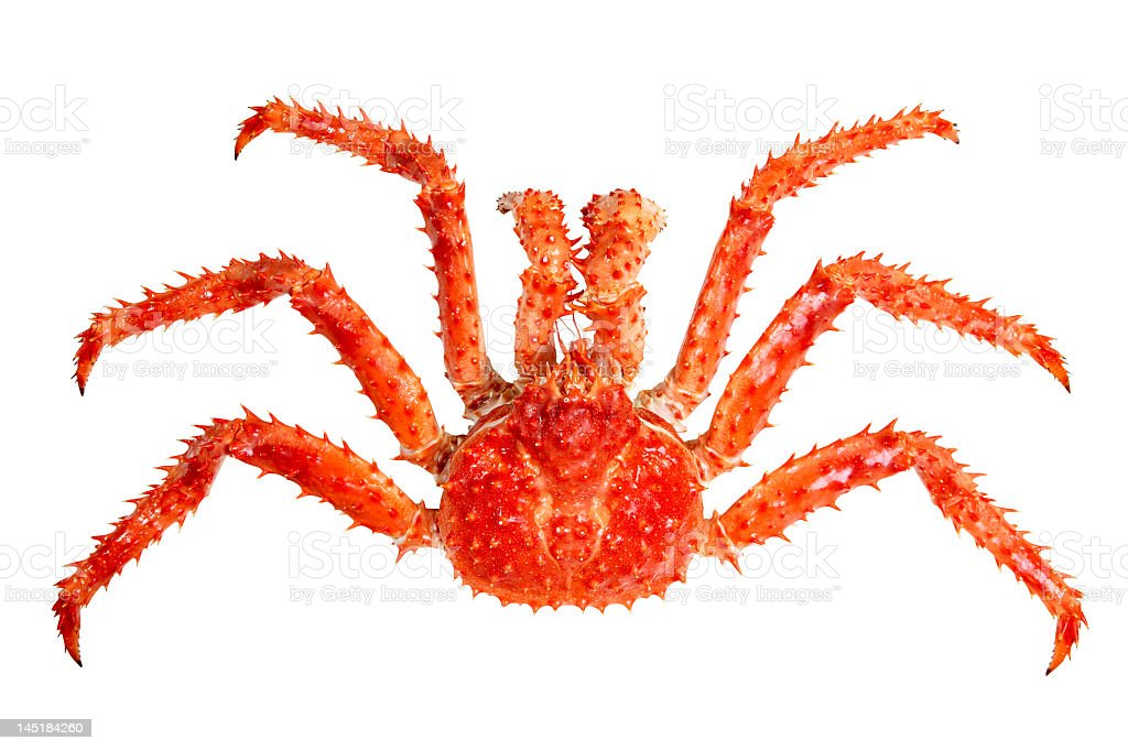 Giant spiky crab with long claws on white background stock photo