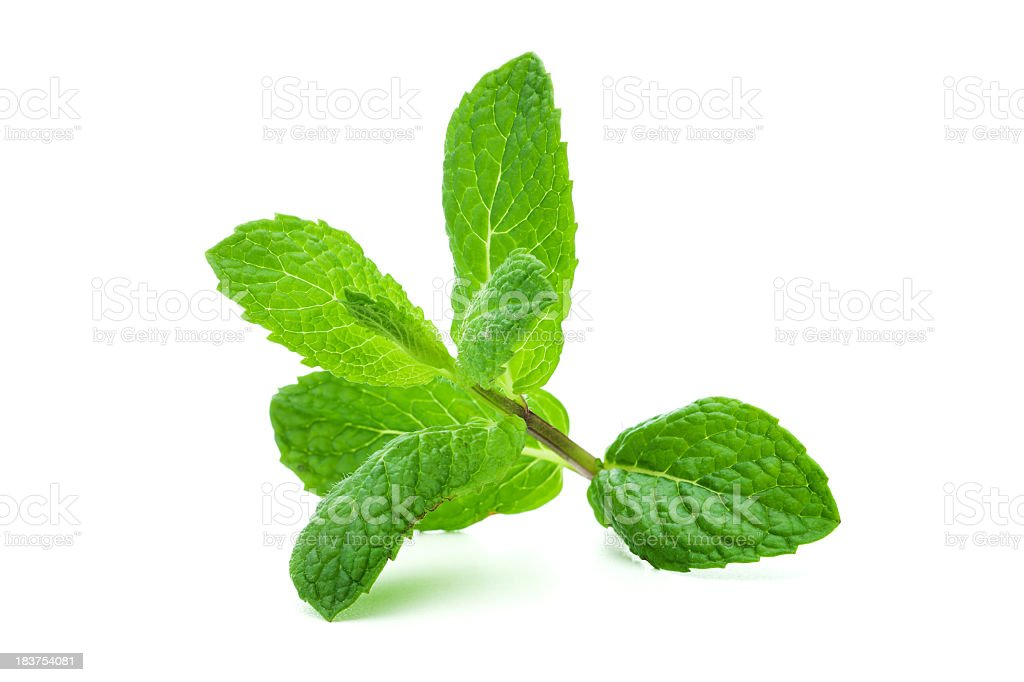 A giant sprig of lit mint on a white background stock photo