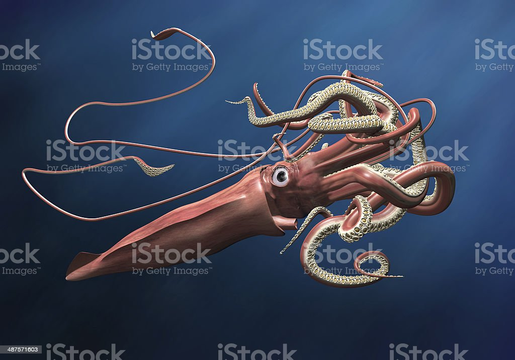 Giant Squid stock photo