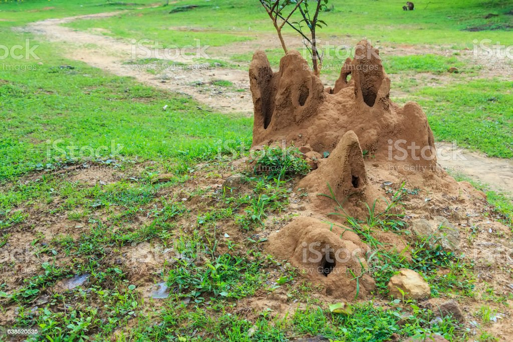 Giant termite mound stock photo