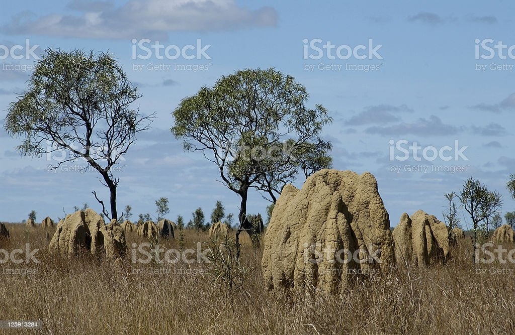 Giant Termite mounds Australia royalty-free stock photo