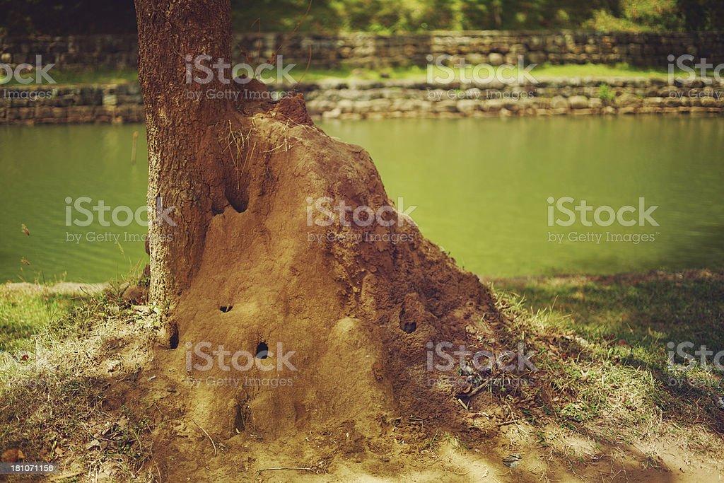 Giant Termite Mounds stock photo