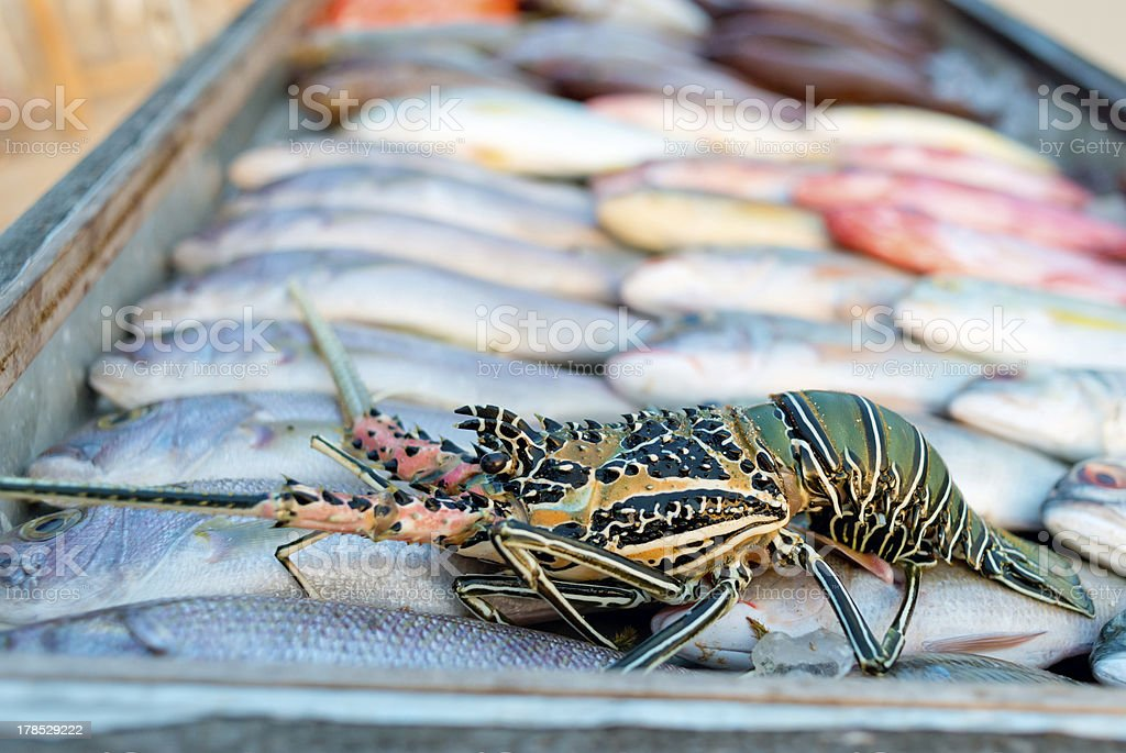 Giant Tiger Prawns and white snapper at a fish market royalty-free stock photo