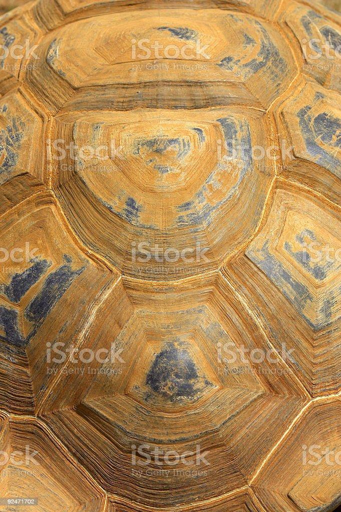 Giant tortoise shell royalty-free stock photo