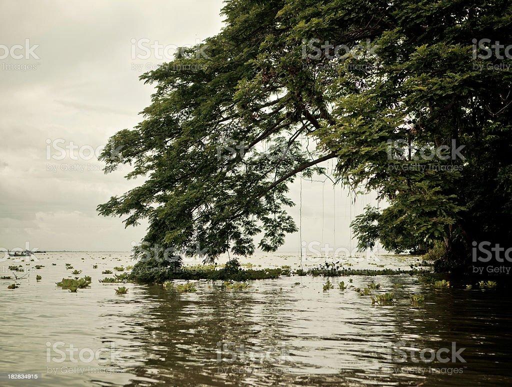 giant tree islet lake nicaragua stock photo