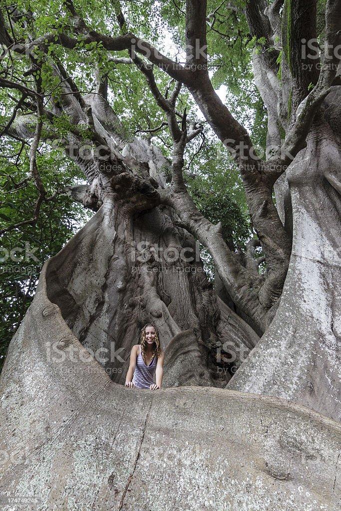 Giant tree royalty-free stock photo