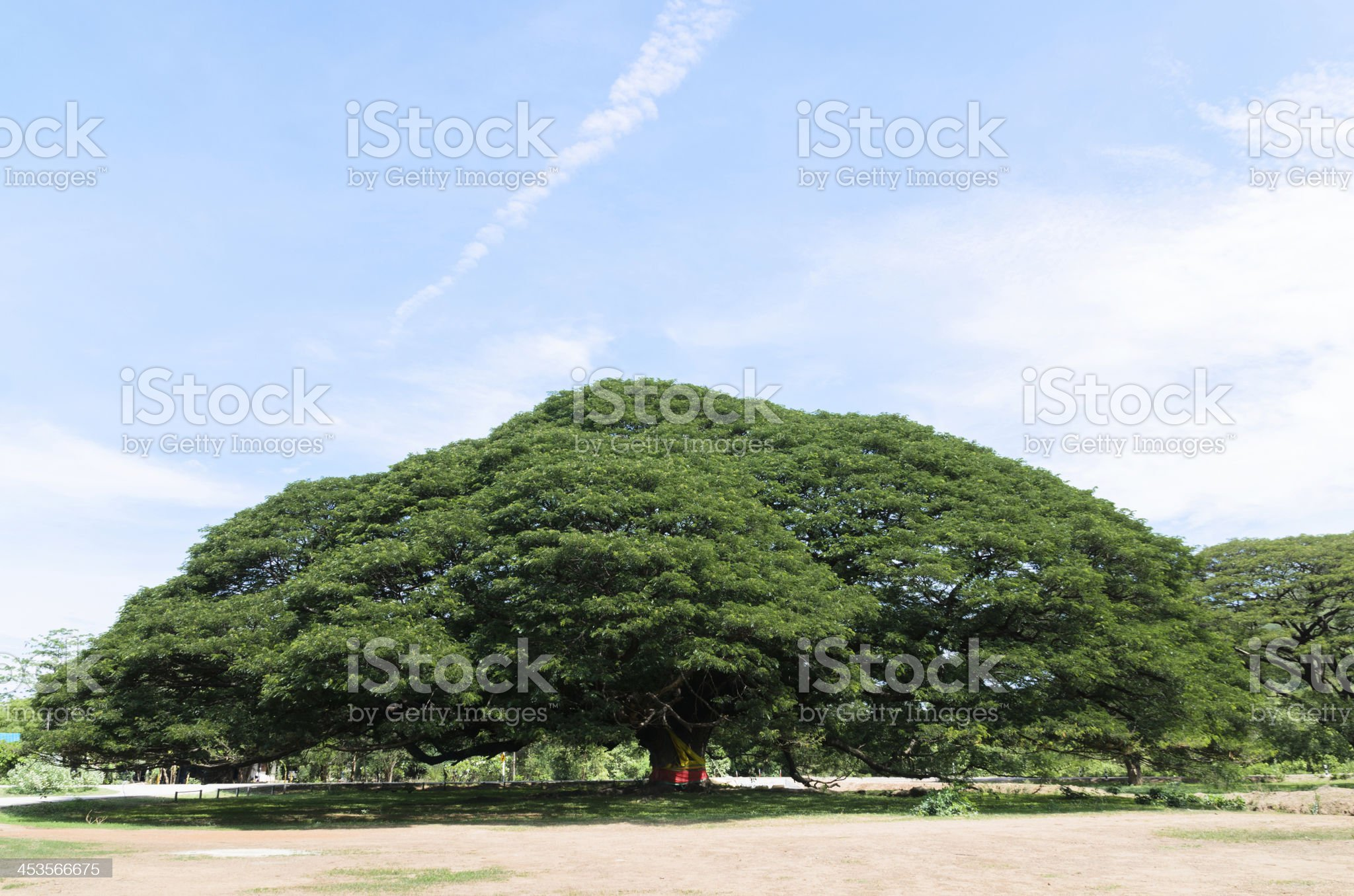 Giant Tree royalty-free stock photo