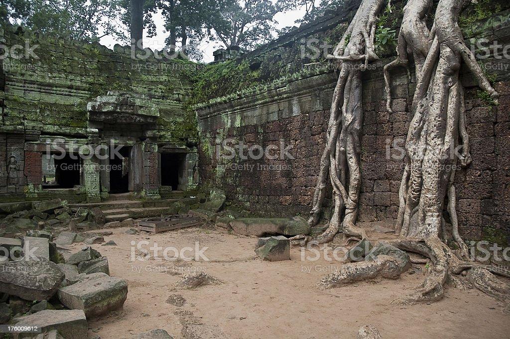 Giant Tree Roots At Ta Prohm Temple, Angkor  Wat, Cambodia stock photo