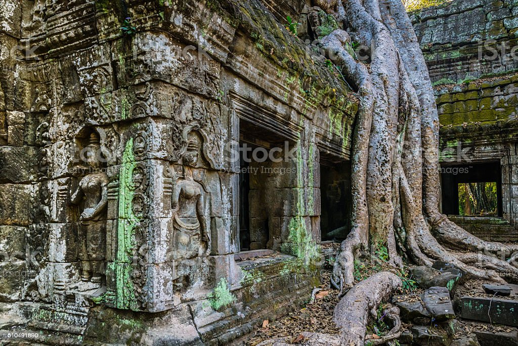 Giant Tree Ta Prohm Temple Angkor Wat Siem Reap Cambodia stock photo