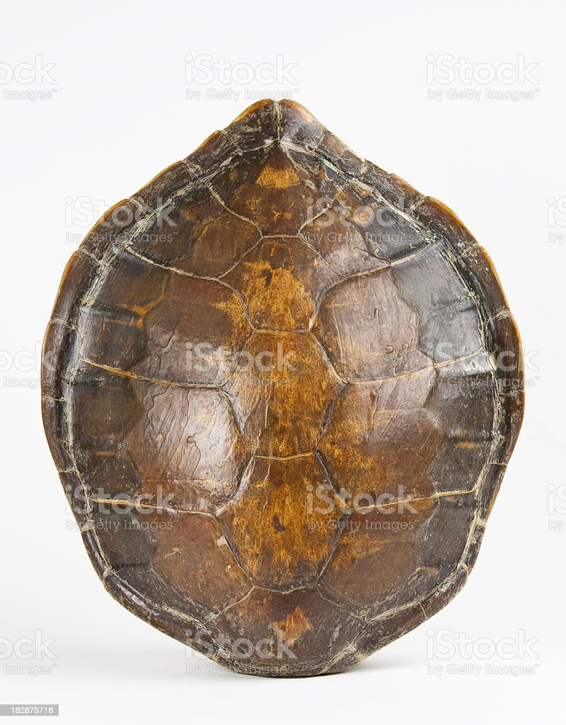 Giant Turtle Shell stock photo