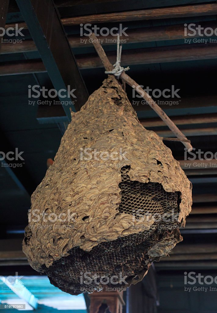Гигантский оса гнездо Стоковые фото Стоковая фотография
