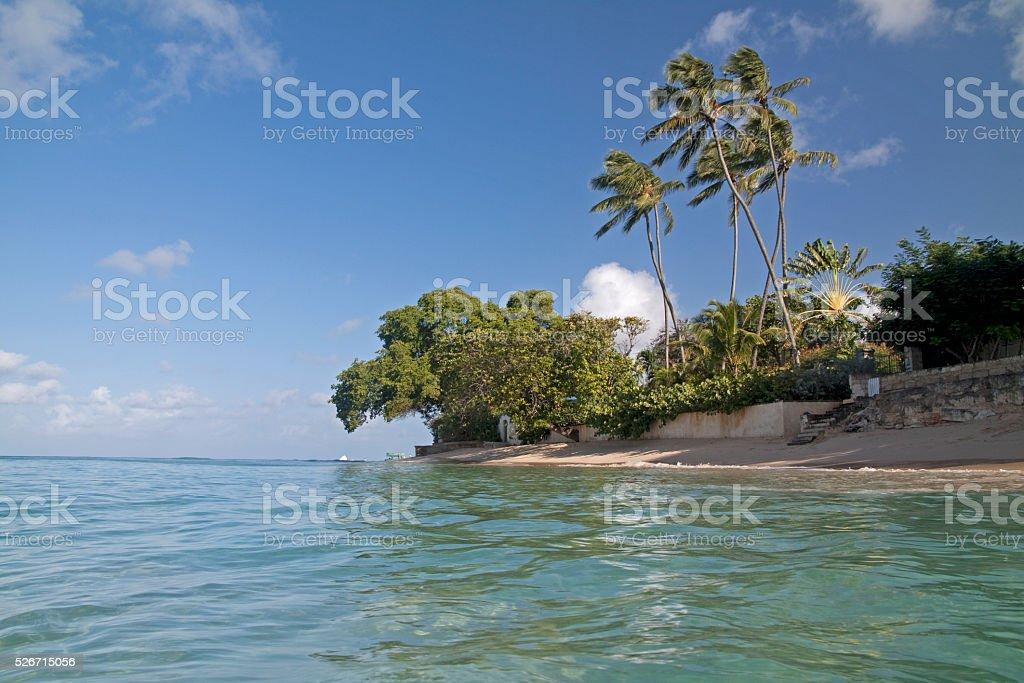 Gibbs beach in Barbados! stock photo