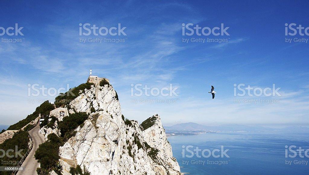 Gibraltar Seagull stock photo