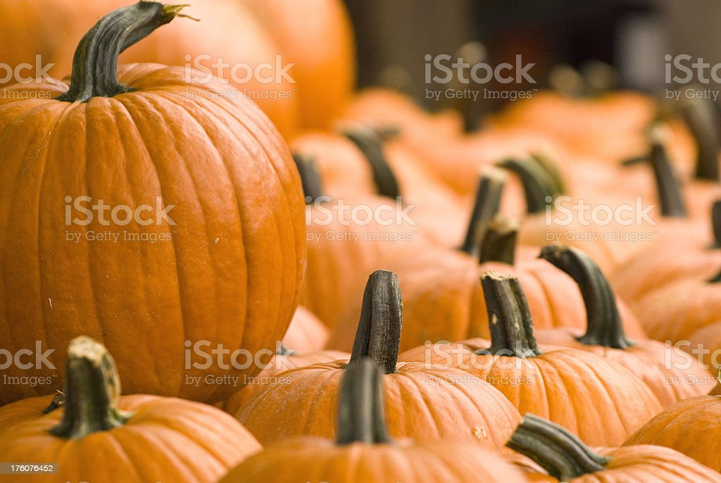 Giddy Gourds royalty-free stock photo