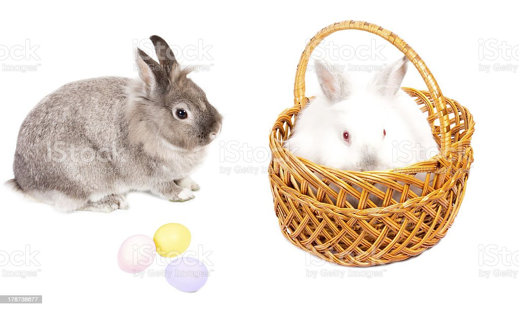 Gift of Easter bunnies and eggs royalty-free stock photo