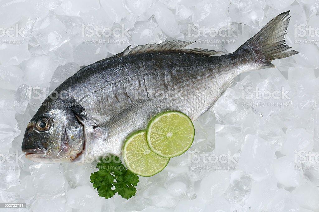 Gilthead fish on ice stock photo