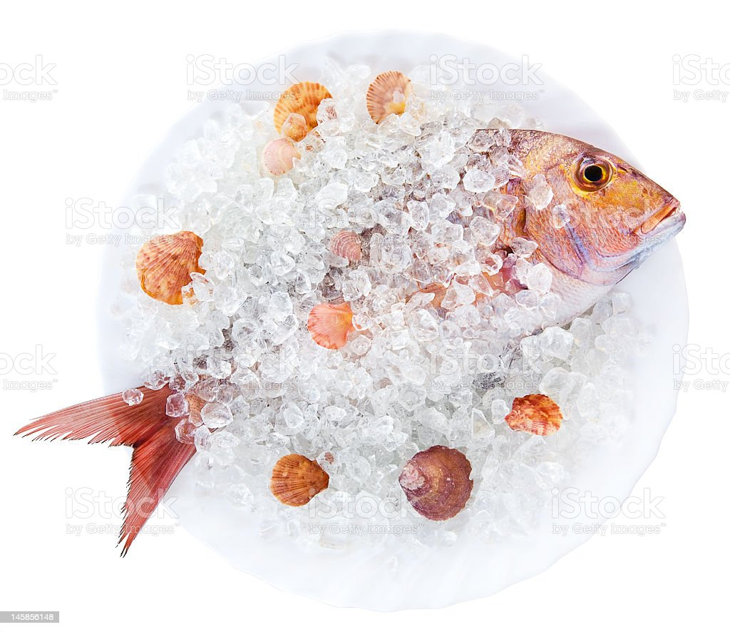 gilthead in ice royalty-free stock photo
