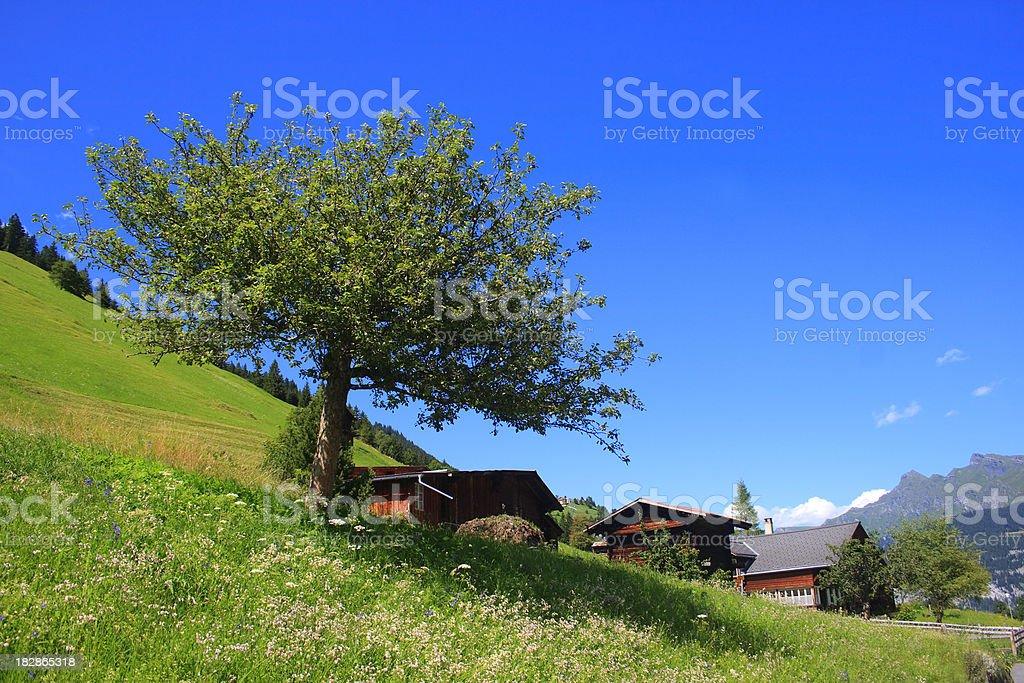 Gimmelwald, Switzerland royalty-free stock photo