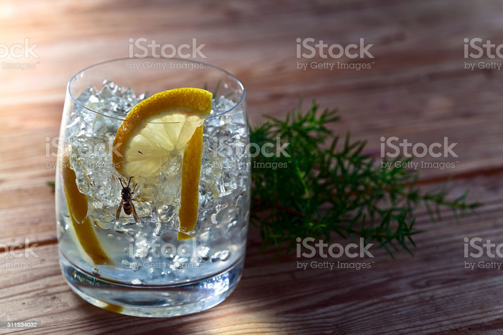 Gin with lemon , ice and juniper branch stock photo