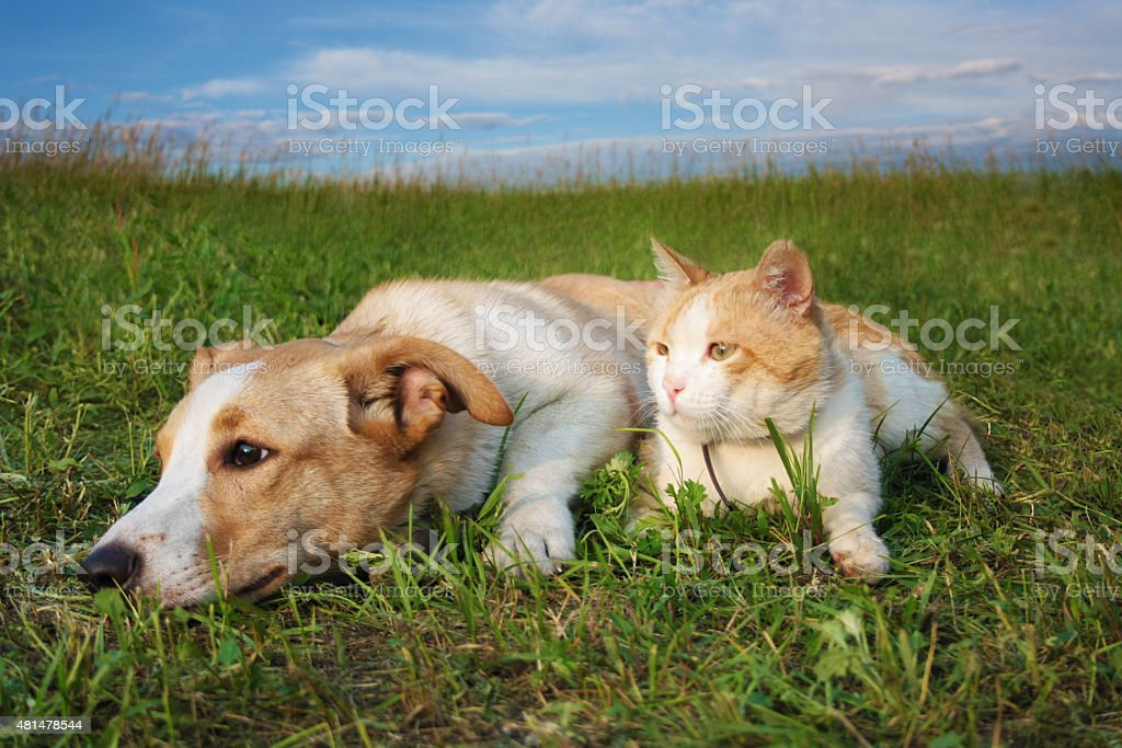 Ginger cat and puppy lying on the grass stock photo