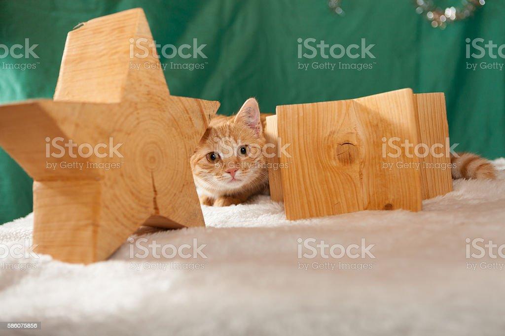 ginger cat between wodden stars stock photo