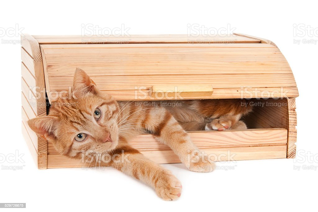 Ginger cat in a wooden breadbox stock photo